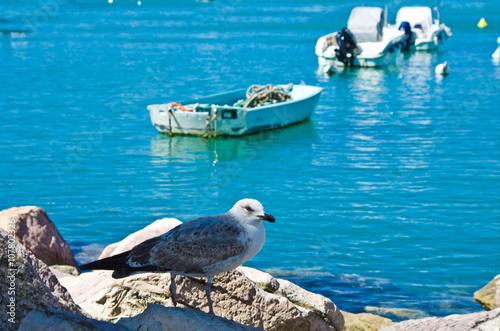 Fotobehang Zwaan sea gull