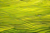 beautiful landscape view of rice terraces
