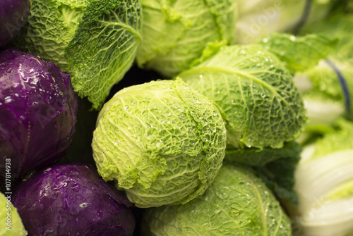 Fresh green cabbage. Fresh headed cabbages covered with drops of water.
