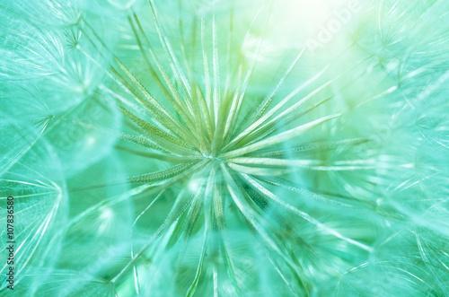 Naklejka beautiful dandelion close