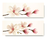 Two magnolia banners. Vector.