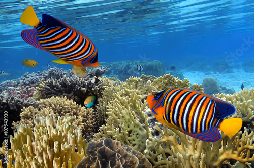 kolorowy-rafa-podwodny-krajobraz-z-ryby-i-koralowce