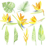 watercolor set tropical flowers and leaves