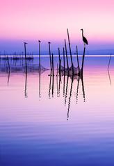 aves en el lago  © kesipun
