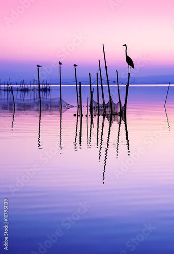 aves en el lago