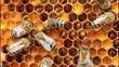 Obrazy na płótnie, fototapety, zdjęcia, fotoobrazy drukowane : Bees create ambrosia. Ambrosia - is bathed in honey pollen. It is used for feeding young bees and alternative medicine.