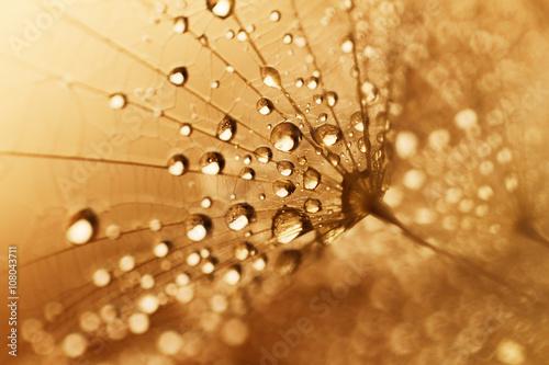 Zdjęcia na płótnie, fototapety na wymiar, obrazy na ścianę : Plant seeds with water drops