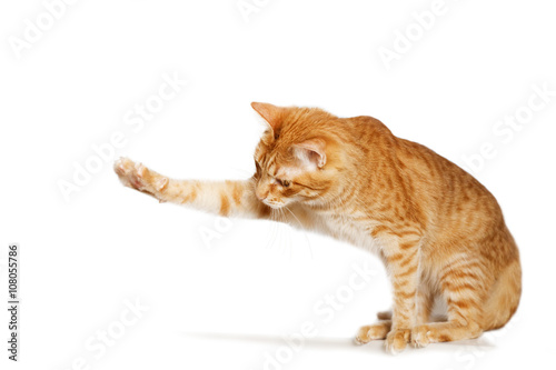 Ginger cat stretches out his paw © mark_ka