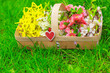 Obrazy na płótnie, fototapety, zdjęcia, fotoobrazy drukowane : basket with beautiful spring flowers