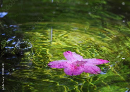 Pink beauty in green water.
