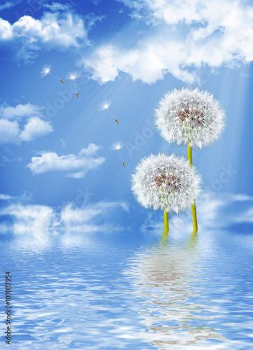 landscape dandelion flower