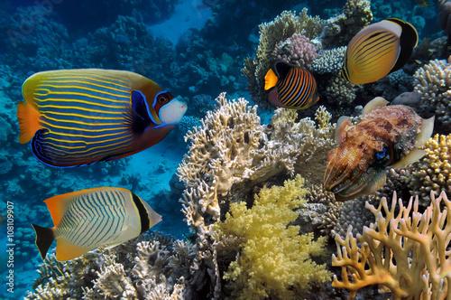 kolorowy-rafa-podwodny-krajobraz-z-rybami-i