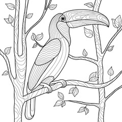 Toucan coloring book for adults vector
