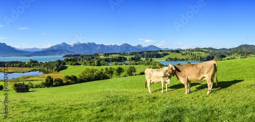 Poster Landschappen Weidewirtschaft im Ostallgäu