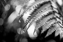 Black and White Fern Plant