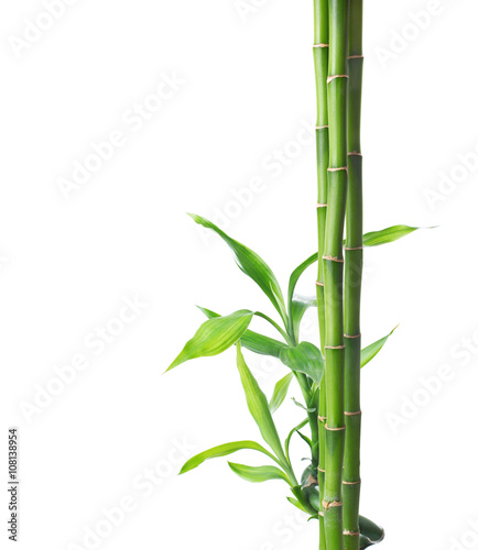 Branches of bamboo isolated on white background.