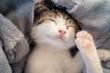 Cute kitten sleeping in blue blanket.