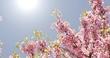 Obrazy na płótnie, fototapety, zdjęcia, fotoobrazy drukowane : splendi rami fioriti con api 3