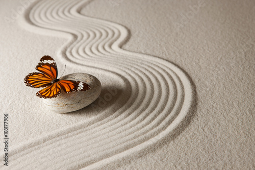 Foto op Canvas Zen Zen butterfly
