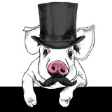 The image pig portrait with mustache and in the bowler hat. Vector illustration.