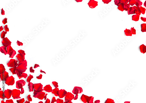 Foto Murales Red rose petals on white background