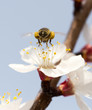 Obrazy na płótnie, fototapety, zdjęcia, fotoobrazy drukowane : bee on a flower in the nature. macro