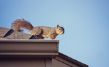 Squirrel on the roof top - 108252181