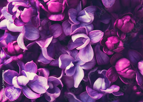 Lilac flowers background Poster