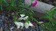 Obrazy na płótnie, fototapety, zdjęcia, fotoobrazy drukowane : Bumblebee on a flower snapdragon