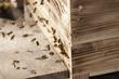 Obrazy na płótnie, fototapety, zdjęcia, fotoobrazy drukowane : Bienen fliegen wild vor ihrem Bienenstock