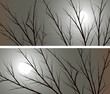 Horizontal wide banners branches of trees against the moon.