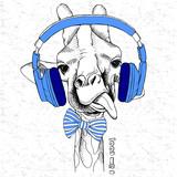 Żyrafa w słuchawkach wystawia język