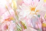 Fototapety Peony flower background