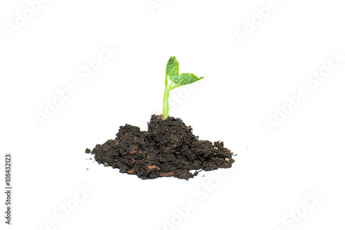 Green sprout grown from the soil heap Poster