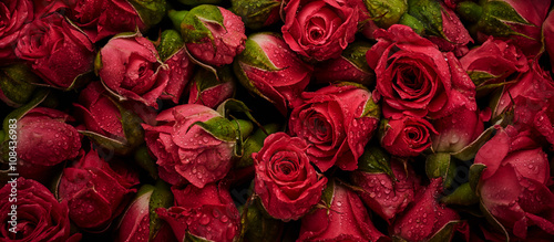 Roses with drops of water - 108436983