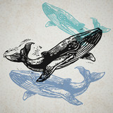 Vector Whale animals in abstract composition.