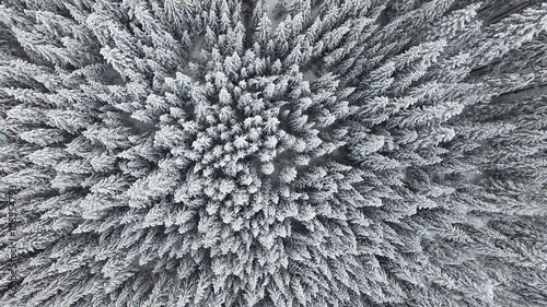 Frozen Pine Forest From the Air