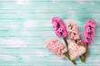 Fresh pink hyacinths  and  decorative heart  on  turquoise paint