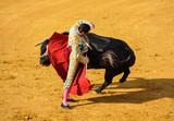 Torero y toro, tauromaquia, España
