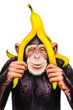 Chimpanzee with a banana peel on his head. Watercolor illustration. - 108593756