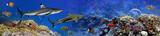 Panorama of marine species - 108606594