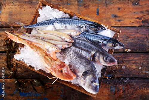 Selection of freshly caught marine fish