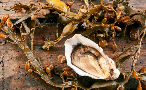 Single opened oyster on a wooden table with kelp