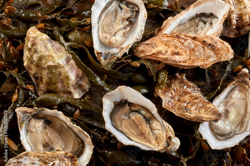 Assorted raw oysters in shells
