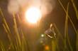 Obrazy na płótnie, fototapety, zdjęcia, fotoobrazy drukowane : Gänseblümchen in der Abendsonne