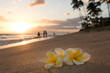 Plumeria flowers on the shore on sunset beach with golden sunlight and people on background