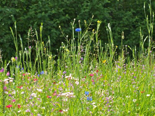 Panel Szklany Wiese mit Blumen im Sommer