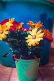 Jellow daisy
