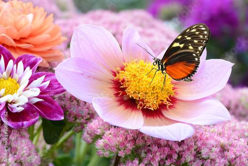 obraz lub plakat Schmetterling 209
