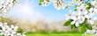 Obrazy na płótnie, fototapety, zdjęcia, fotoobrazy drukowane : Frühlingsparadies mit weißen Blüten, Sonne und blauem Himmel,